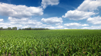Crop Insurance Quote